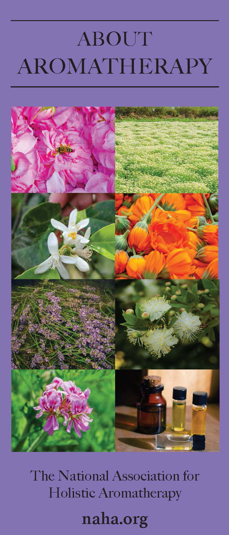 About Aromatherapy Brochure- PDF DOWNLOAD ONLY