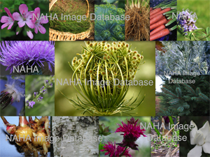 NAHA's Aromatic and Herbal Image Database  Tier 2