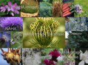 NAHA's Aromatic and Herbal Image Database  Tier 3