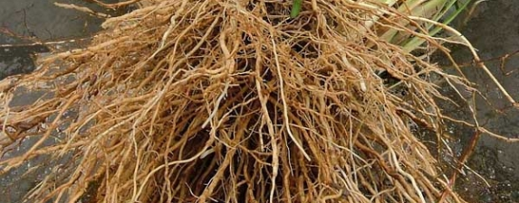 Roots A Year With Morphology Using Plant Based Origins